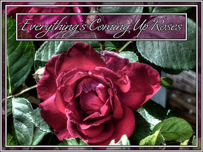 Photograph - Everything's Coming Up Roses by Leslie Montgomery