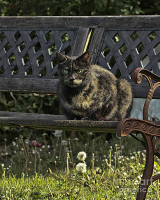 Photograph - Evie Cat On A Bench Portrait by Terri Waters