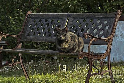 Photograph - Evie Cat On A Bench Landscape by Terri Waters