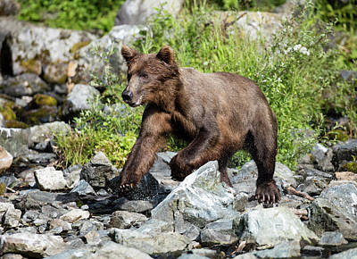 Photograph - Excited Bear by Gloria Anderson