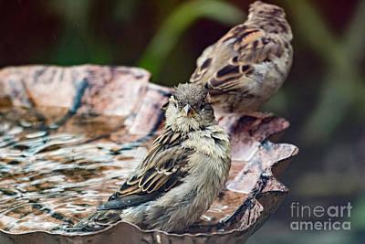 Photograph - Excuse Me I Am Taking A Bath by Brian Roscorla
