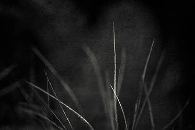 Photograph - Exhale by Yvette Van Teeffelen