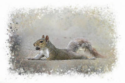 Photograph - Exhausted Squirrel by Jai Johnson