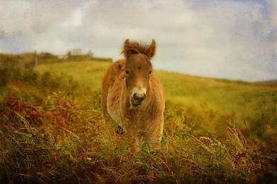 Photograph - Exmoor Wild Pony by Carla Parris