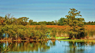 Photograph - Exner Marsh Nature Preserve  by Tom Jelen
