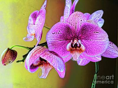 Photograph - Exotic Beauty by Diana Mary Sharpton