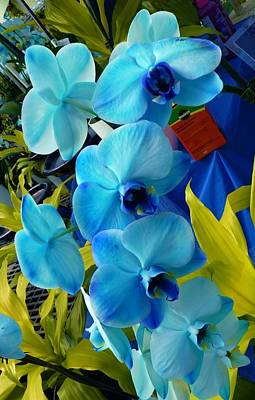 Exotic Blue Orchids Art Print by Jeanette Oberholtzer
