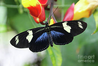 Photograph - Exotic Butterfly by Julia Gavin