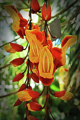 Photograph - Exotic Climber by Nareeta Martin