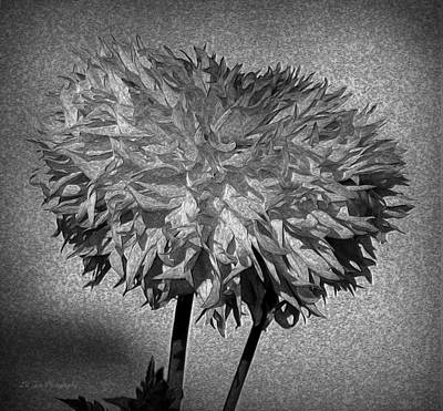 Photograph - Exotic Dahlia In Black And White by Jeanette C Landstrom