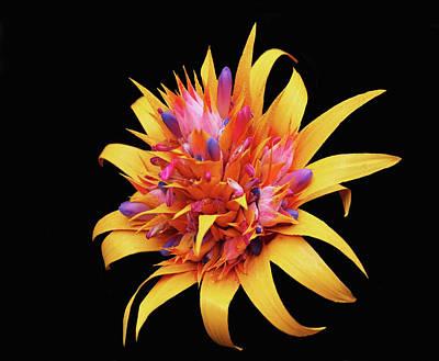 Digital Art - Exotic Flowers by Dennis Buckman