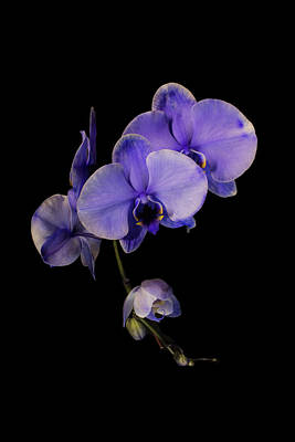 Photograph - Exotic In Purple by Sara Hudock