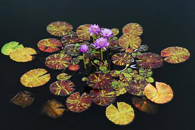 Exotic Lilies Art Print by Kurt Shaffer
