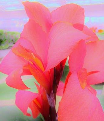 Photograph - Exotic Lily by Sharon Ackley