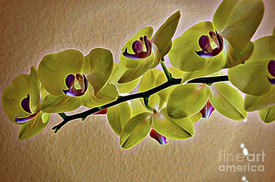 Photograph - Exotic Orchid In Chartreuse  by Diana Mary Sharpton