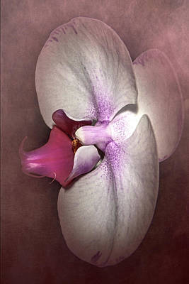 Photograph - Exotic Orchid by Judy Hall-Folde