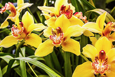 Garden Photograph - Exotic Orchids  by Jorgo Photography - Wall Art Gallery