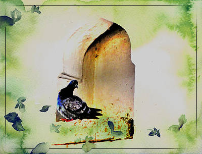 Gate Watercolor Photograph - Exotic Travel Pigeons In Palaces India Rajasthan 1c by Sue Jacobi