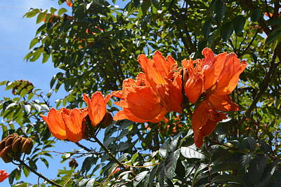 Photograph - Exotic Tropical Orange Flowers In Honduras by Carla Parris