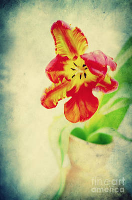 Flora Photograph - Exotic Tulip by Angela Doelling AD DESIGN Photo and PhotoArt