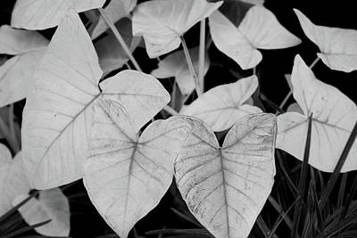 Photograph - Exotic White Leaves by Nareeta Martin