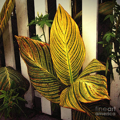 Exotica Nova Angliae Art Print by RC deWinter