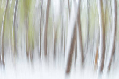 Expanding Forest Print by Darren  White