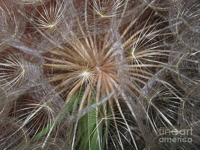 Photograph - Experience The Dandelion by Marie Neder