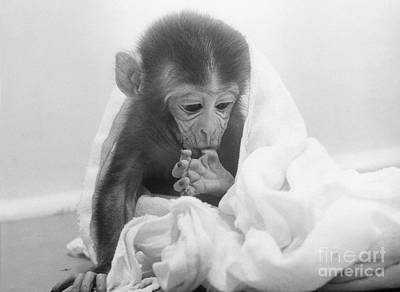 Behavioral Photograph - Experimental Monkey by Science Source