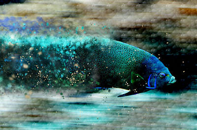 Photograph - Exploding Fish by Ericamaxine Price