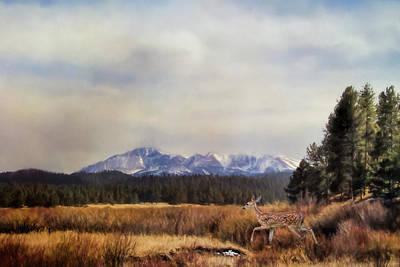 Photograph - Exploring Deer Art by Jai Johnson