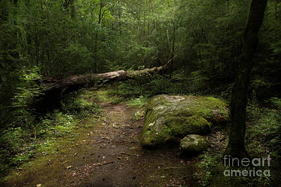 Photograph - Exploring The Trail by Mike Eingle