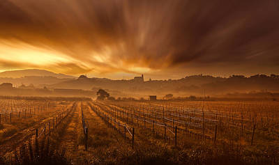 Vineyard Photograph - Explosion by Jorge Maia
