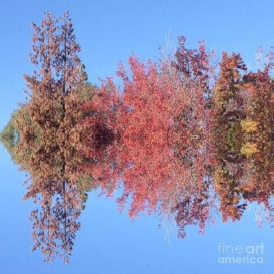 Photograph - Explosion Of Autumn Leaves by Nora Boghossian