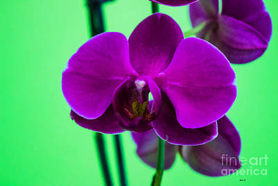 Photograph - Exposed Orchid by Roberta Byram