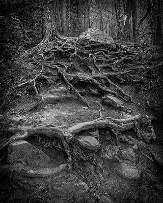 Photograph - Exposed Roots by Alan Raasch