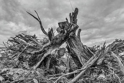 Photograph - Exposed Roots by Judith Barath