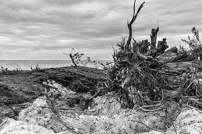 Photograph - Exposed Roots On Grace Bay Beach by Judith Barath