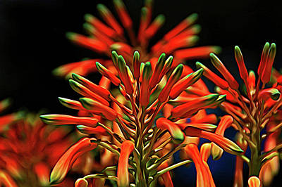 Photograph - Expressionalism Aloe Flower by Aimee L Maher Photography and Art Visit ALMGallerydotcom