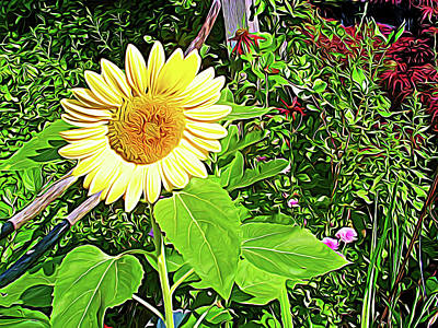 Photograph - Expressionalism Garden Sunflower by Aimee L Maher Photography and Art Visit ALMGallerydotcom