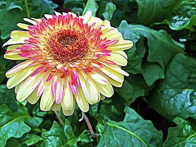 Photograph - Expressionalism Gerbera Daisy by Aimee L Maher Photography and Art Visit ALMGallerydotcom