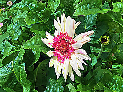 Photograph - Expressionalism Gerbera Daisy And Bud by Aimee L Maher Photography and Art Visit ALMGallerydotcom