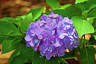 Hydrangeas Photograph - Expressionalism Hydrangea by Aimee L Maher Photography and Art Visit ALMGallerydotcom