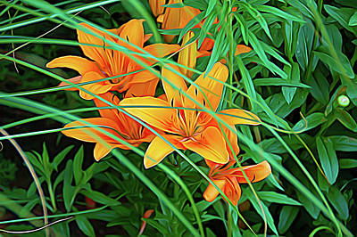 Photograph - Expressionalism Orange Tiger Lilies by Aimee L Maher Photography and Art Visit ALMGallerydotcom