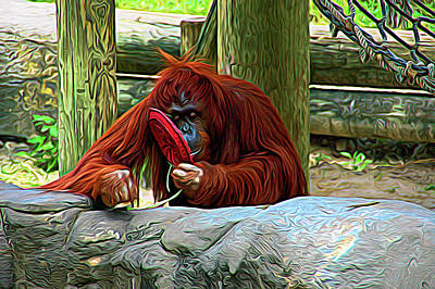 Photograph - Expressionalism Orangutan by Aimee L Maher Photography and Art Visit ALMGallerydotcom