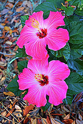 Photograph - Expressionalism Pink Hibiscus Blloms Vertical by Aimee L Maher Photography and Art Visit ALMGallerydotcom