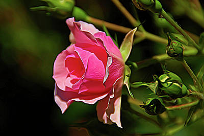 Photograph - Expressionalism Pink Rose Close Up by Aimee L Maher Photography and Art Visit ALMGallerydotcom