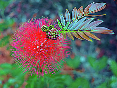 Photograph - Expressionalism Powder Puff Flower by Aimee L Maher Photography and Art Visit ALMGallerydotcom