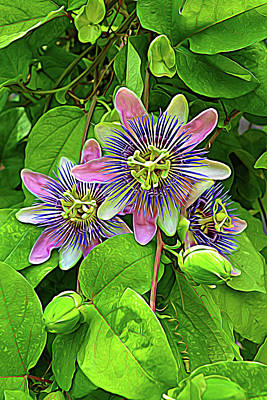 Photograph - Expressionalism Purple Passion Vine 2 by Aimee L Maher Photography and Art Visit ALMGallerydotcom