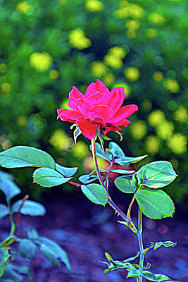 Photograph - Expressionalism Red Knockout Rose Vertical by Aimee L Maher Photography and Art Visit ALMGallerydotcom